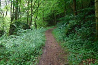 Wald und Wiesen… Pottenstein