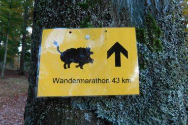 Wandermarathon Pfalz