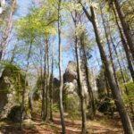 Bäume und Felsen