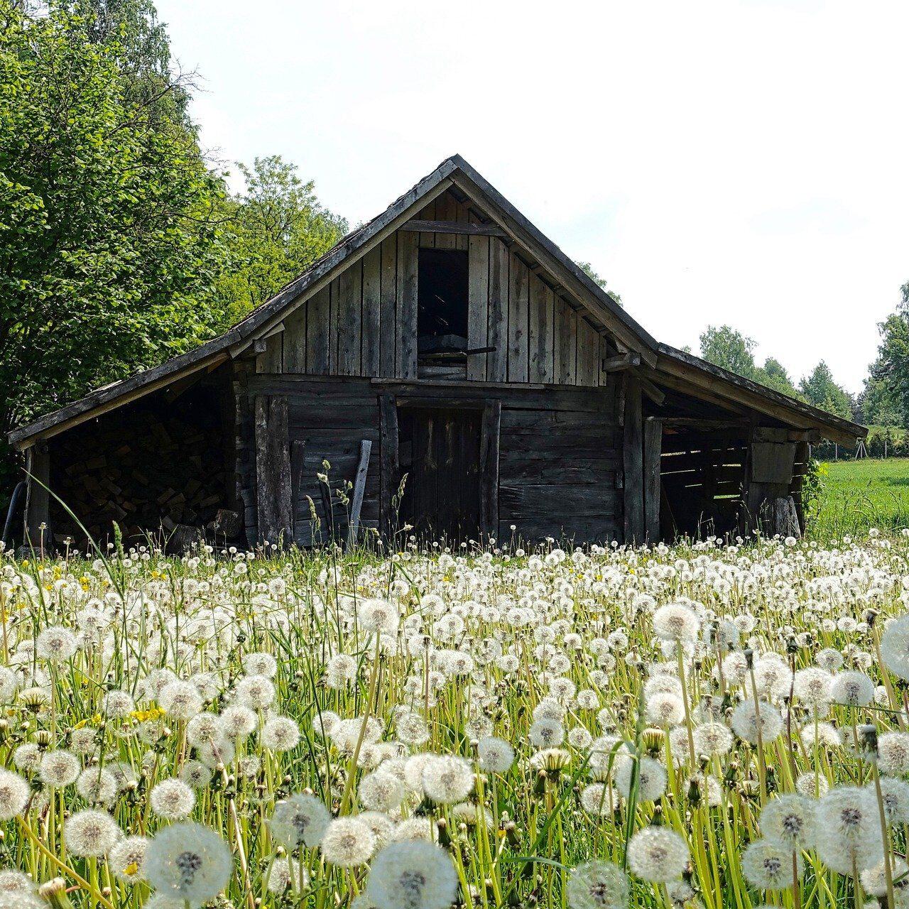 Hütte in der Wiese