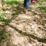 Barfuß im Wald
