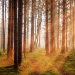 goldener Wald
